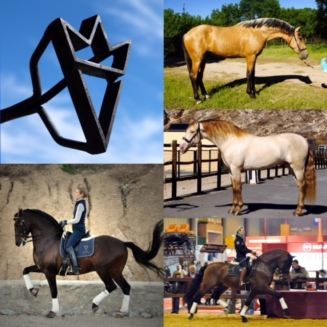 5 top studs on our 2020 Worldwide Breedingprogram - Book your stallion now! - Vikinga Sales & Breeding